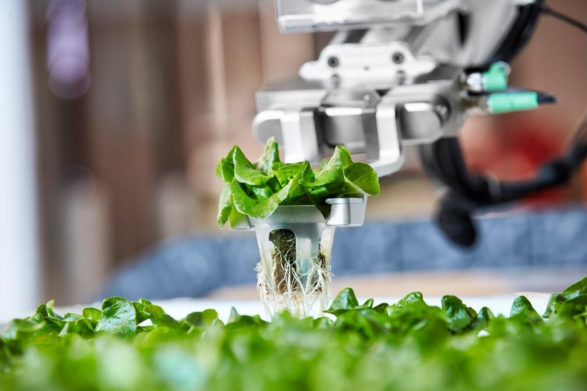 Ứng dụng trí tuệ nhân tạo trong ngành công nghiệp thực phẩm